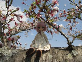 リアム桜.jpg